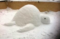 Tortue neige