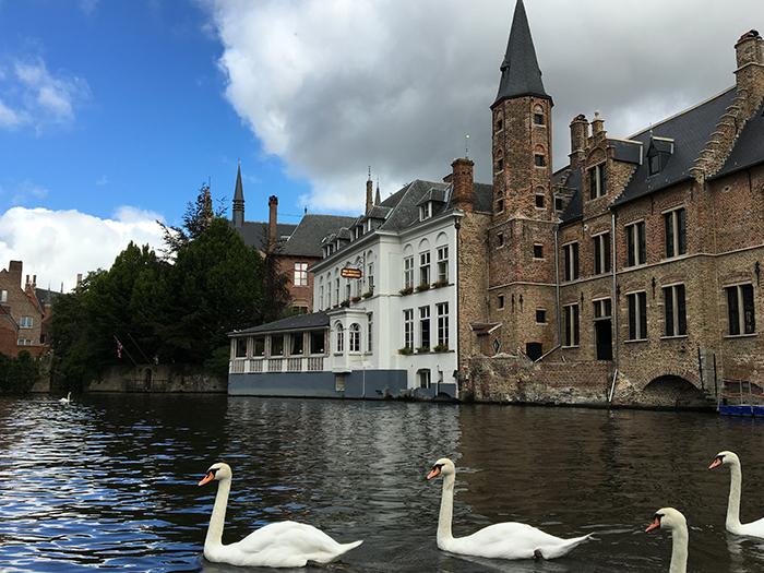 Bruges canaux cignes