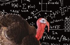 Dindon équations