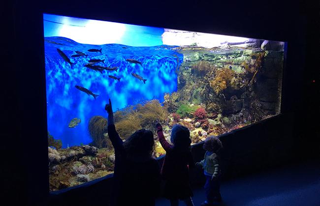 Aquarium la rochelle 1