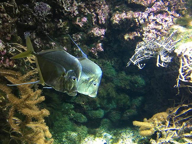 Aquarium la rochelle 3