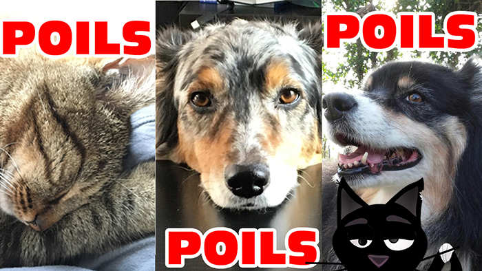 Poils2
